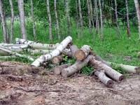 Не вывезенные остатки деревьев - июнь 2013