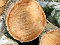 Некоторым деревьям более 30 лет