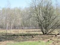 Подпал травы и зеленых насаждений в КП Шмелево